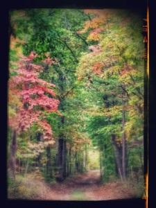 20141010_130821-effects.jpg